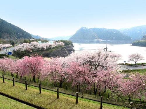米泉湖公園-櫻之丘