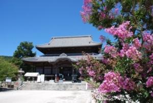 周防国分寺の百日紅