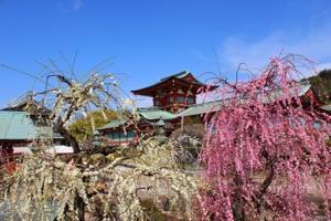 天神山公園からの眺望