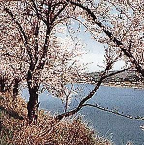 大道理の棚田と芝桜
