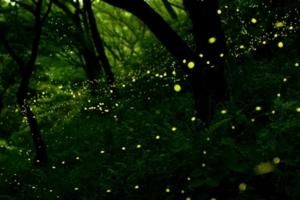 本山岬公園「くぐり岩」
