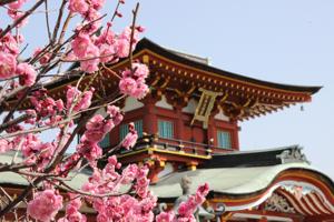 防府天満宮梅園の梅