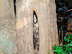 나무 속 관음상